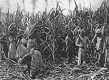 Les Pionniers du Livradois dans ARTISANAT FRANCAIS agriculture