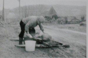 Faire la Saint COCHON dans Côte d'Or cochon-1-300x199