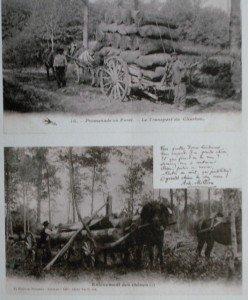 coupeur-de-bois-2-248x300 dans Morvan