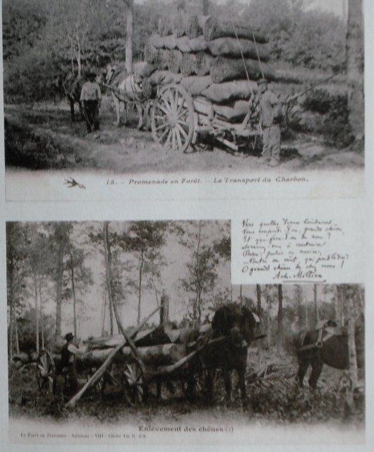 coupeur-de-bois-21 dans Morvan