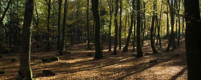 Le Morvan, un pays de Forêts à travailler dans ARTISANAT FRANCAIS foret