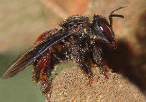 Le miel et sa recette dans Epiceries gourmandes abeille-300x210