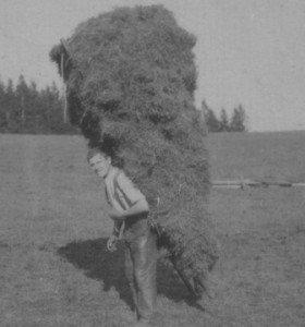 A travers les champs au 20ème siècle dans HUMEUR DES ANCETRES foin-280x300