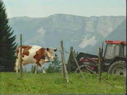L'élevage en Jura dans Jura jura