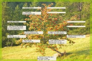 Découvrir nos ancêtres dans AUX SIECLES DERNIERS arbre-de-vie
