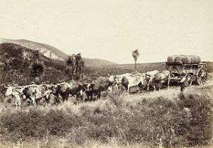 Recherche d'ancêtres néo-zélandais dans AUX SIECLES DERNIERS vieu-300x209