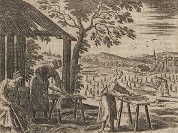 Le Chanvre des années 1834 dans FLORE FRANCAISE images-15