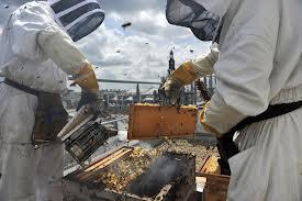 le miel de Paris dans FLORE FRANCAISE images-7