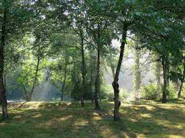 Forêt chatillonnaise (21) dans Bourgogne telechargement-8