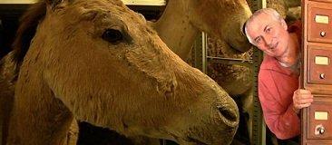 l'âne sauvage de l'impératrice Eugénie dans FAUNE FRANCAISE lewino-une-2010930-jpg_1783394