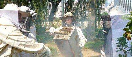 Produits locaux de la région Parisienne dans Les spécialités neuilly-terroir-agricultue-ruches-1046676-jpg_922955