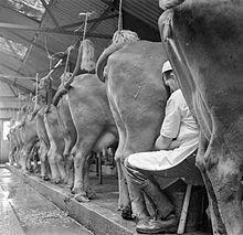 220px-Parsonage_Farm-_Dairy_Farming_in_Devon,_England,_1942_D10227