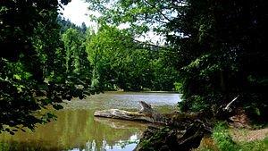 300px-Arboretum,_lac_de_Pezanin