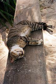 180px-Cat_in_Zanzibar