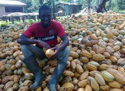 Cocoa_farming_in_Ghana