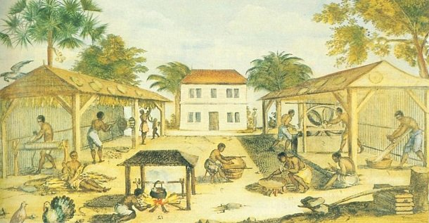 culture du tabac