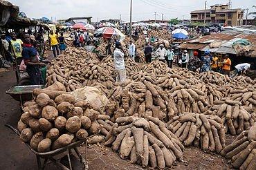 Nigeria_yam2