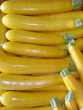 Courgette_jaune